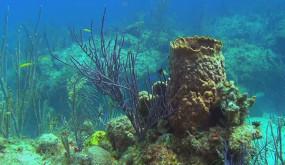 Багамские острова. Таинственные пещеры и затонувшие корабли