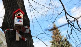 Телеканал «Ля-минор ТВ» принял участие во Всероссийском экологическом проекте «Поможем птицам вместе!»