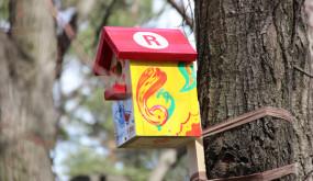 Телеканал «Индия ТВ» принял участие во Всероссийском экологическом проекте «Поможем птицам вместе!»
