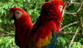 Обаятельная Амазонка