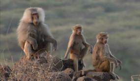 Приматы: Жизнь