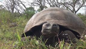 Уникальные Галапагосские Острова : Южная Америка