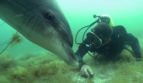 Танцы с дельфинами